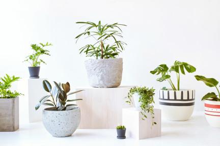 通过图片诊断植物健康状况,Plantbot 做您的掌上园艺师