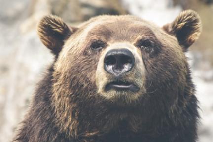 """市值前百币中只有40个项目不是""""空气币"""",熊市中财富该去哪里?"""
