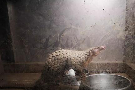 瘟疫曾多次放过人类,人类能否放过野生动物?
