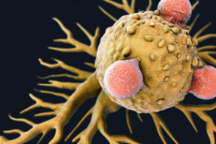 36氪首发 |「仁东医学」获7500万元A轮融资,要提供从伴随诊断到免疫诊疗的一体化解决方案