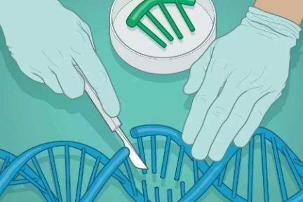 全球十大基因编辑公司,最年轻的才成立1年