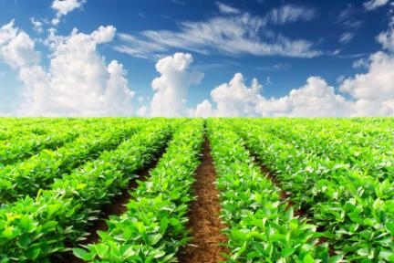 """农业技术升级如何切入?「睿农宝」用物联网软硬件帮助农场实现""""智能化"""""""