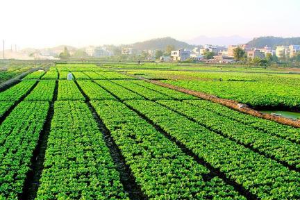 农业技术公司 Indigo 完成 1 亿美元 C 轮融资,利用植物体内有益微生物提高作物水分利用率