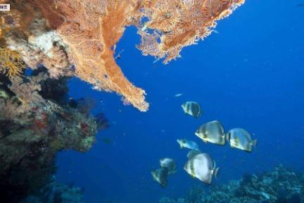 区块链应用   Ocean Chain: 海洋渔业的价值连接器?