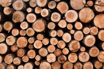 中国木材进口量超全球贸易量1/3,从第三方服务入手的木联科技想做木材全链条跨境贸易商