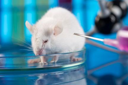 36氪首发   为全球创新药提供动物模型平台,「集萃药康」获鼎晖和国药1.6亿元A轮融资