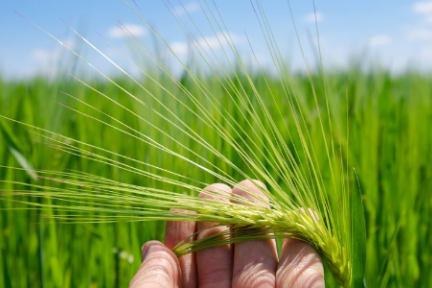 从土地流转、托管到Farm to B,「聚土网」如何运作订单农业?  农业2025 ①