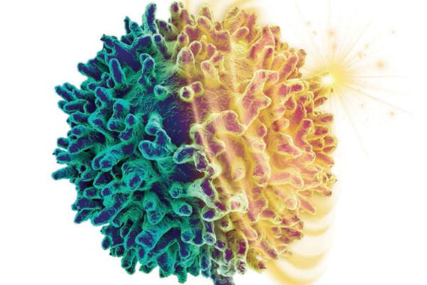 专注原研免疫创新抗体药,「非同生物」完成数千万元pre-A轮融资
