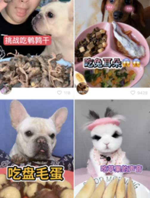 """《""""大胃王""""转做宠物吃播短视频:继续吃播带货?》"""