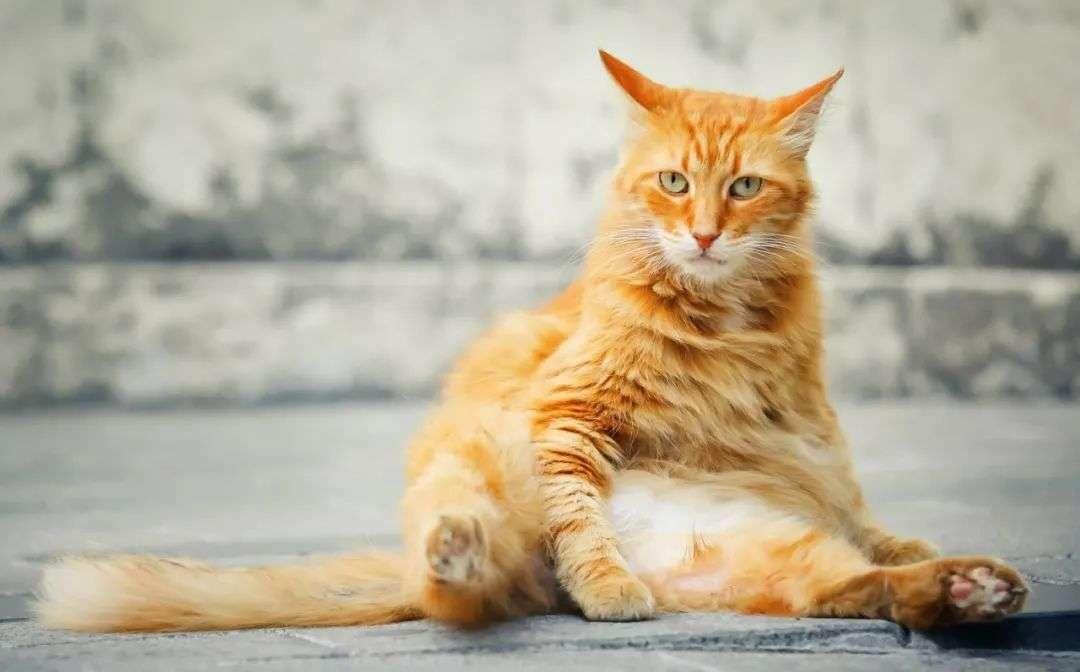 网红审美背后,宠物们正在被肥胖毁掉