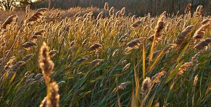 从燕麦到燕麦奶,OATLY掀起植物基潮流