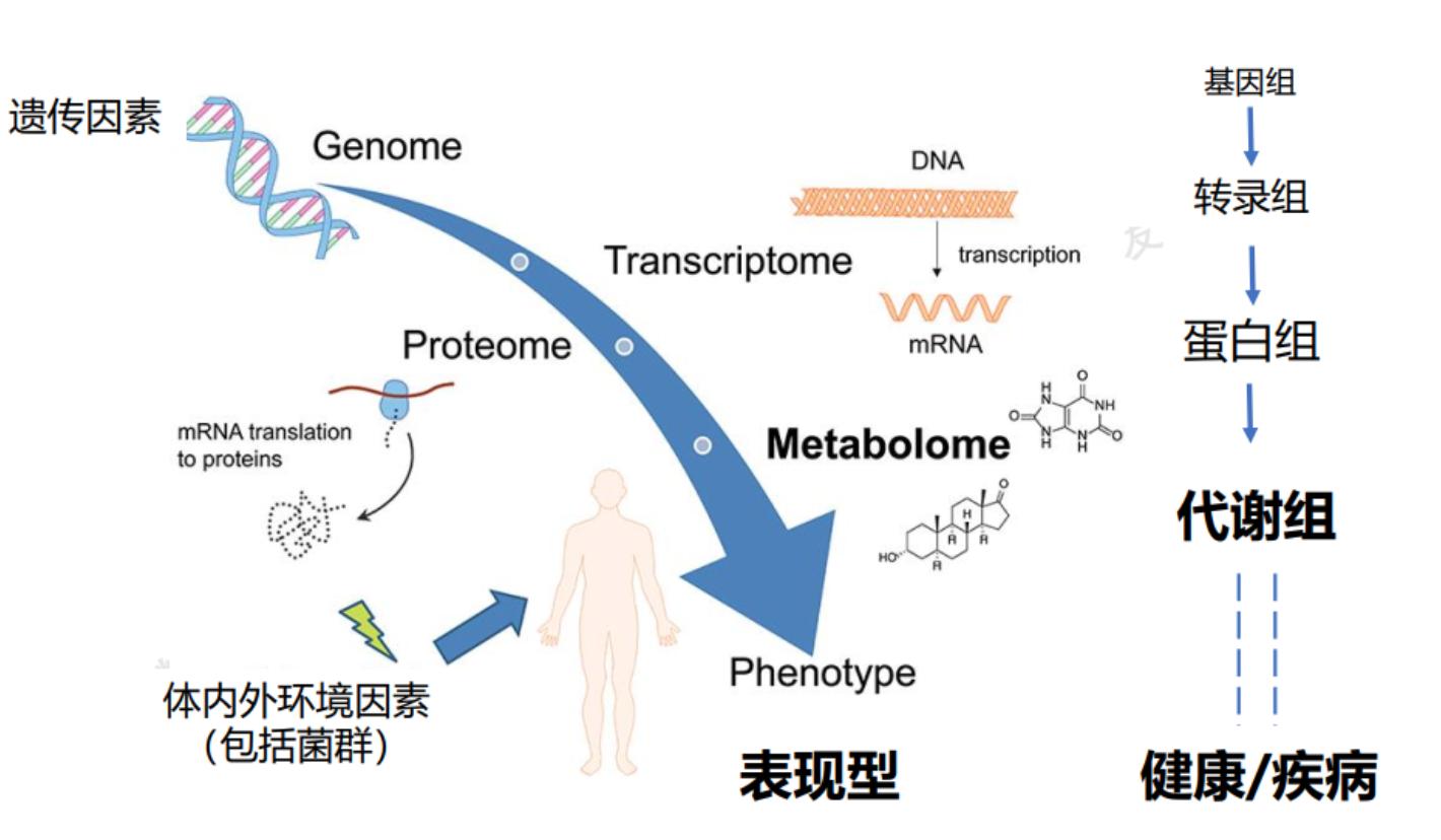 36氪首发 | 提供临床质谱和代谢组学全解决方案,「诺米代谢」获亿元A轮融资