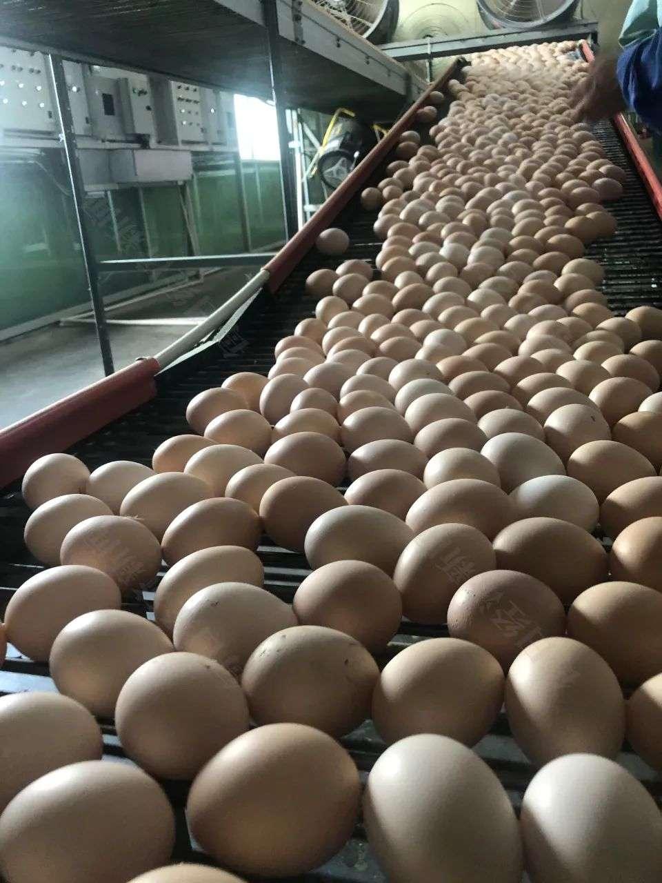 """土鸡蛋的""""金黄生意"""":这家公司一年卖出超2亿元着色剂,很多养殖户都在用"""