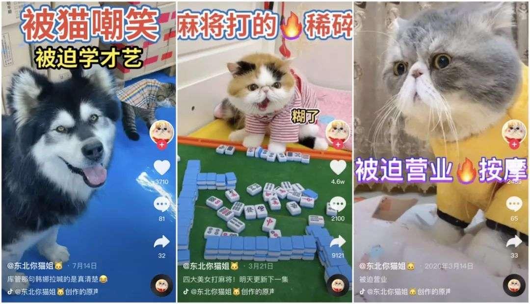 一只狗直播月入百万,宠物经济太氪金