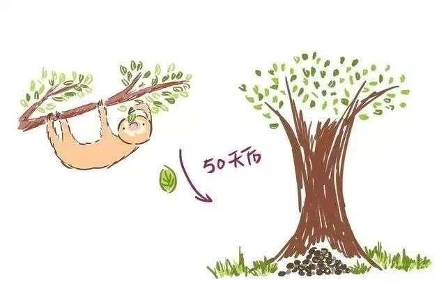 慢吞吞的树懒总是很懒?别再误会它们了