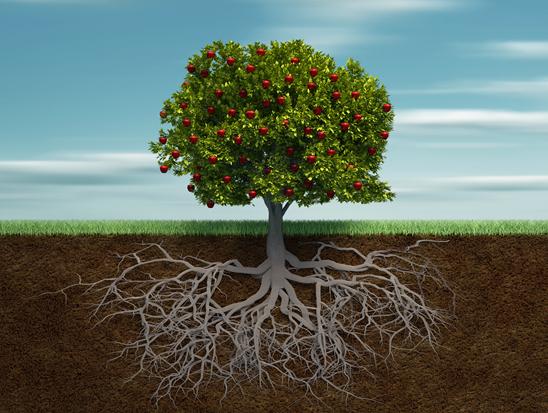 基础软件:IT 产业生态大树下的根